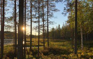 Takapihan metsä